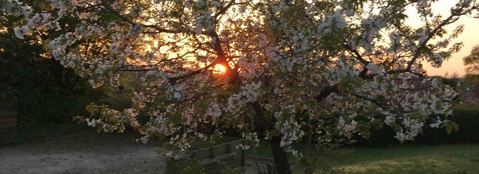 Solnedgang over legepladsen i Garnervænget